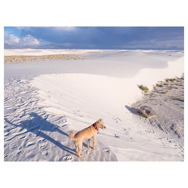 Digging through the archives. White Sands, New Mexico. #havepiperwilltravel
