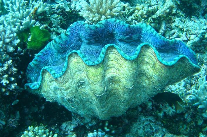 giant_clam.jpg