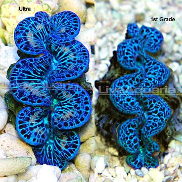 p-80597-clams.jpg