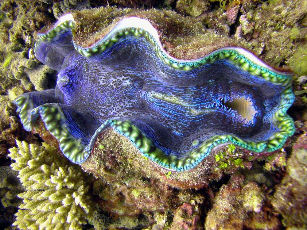 Giant-Clam-Sanctuary-Camiguin.jpg