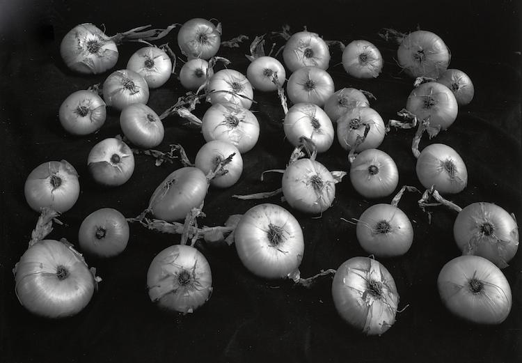 Onion Harvest, Vt.