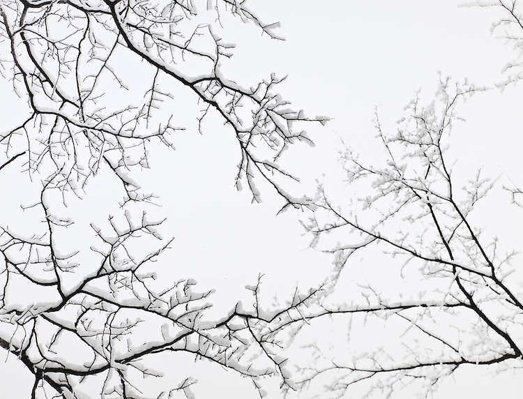 Snow Covered Branches, Vt.