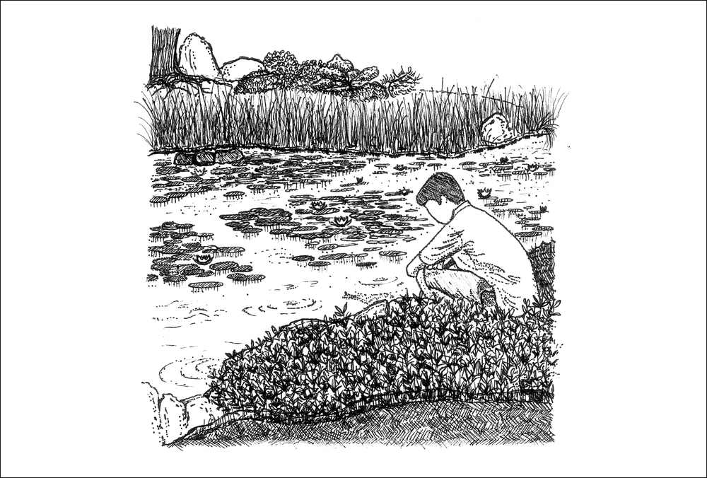 Heian jingu  waterlilies