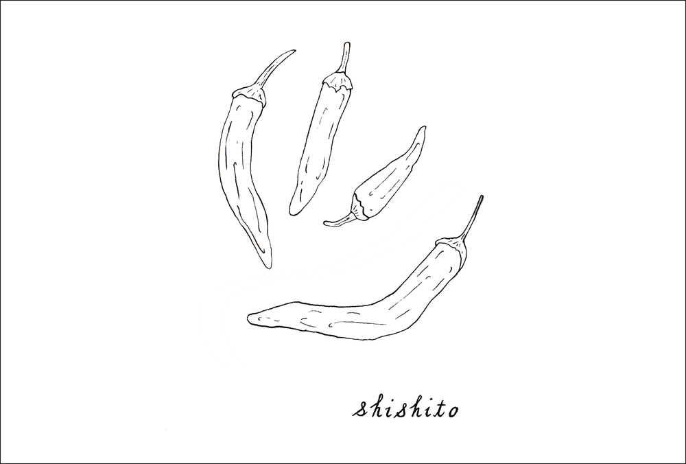 August -  Shishito  (pepper)