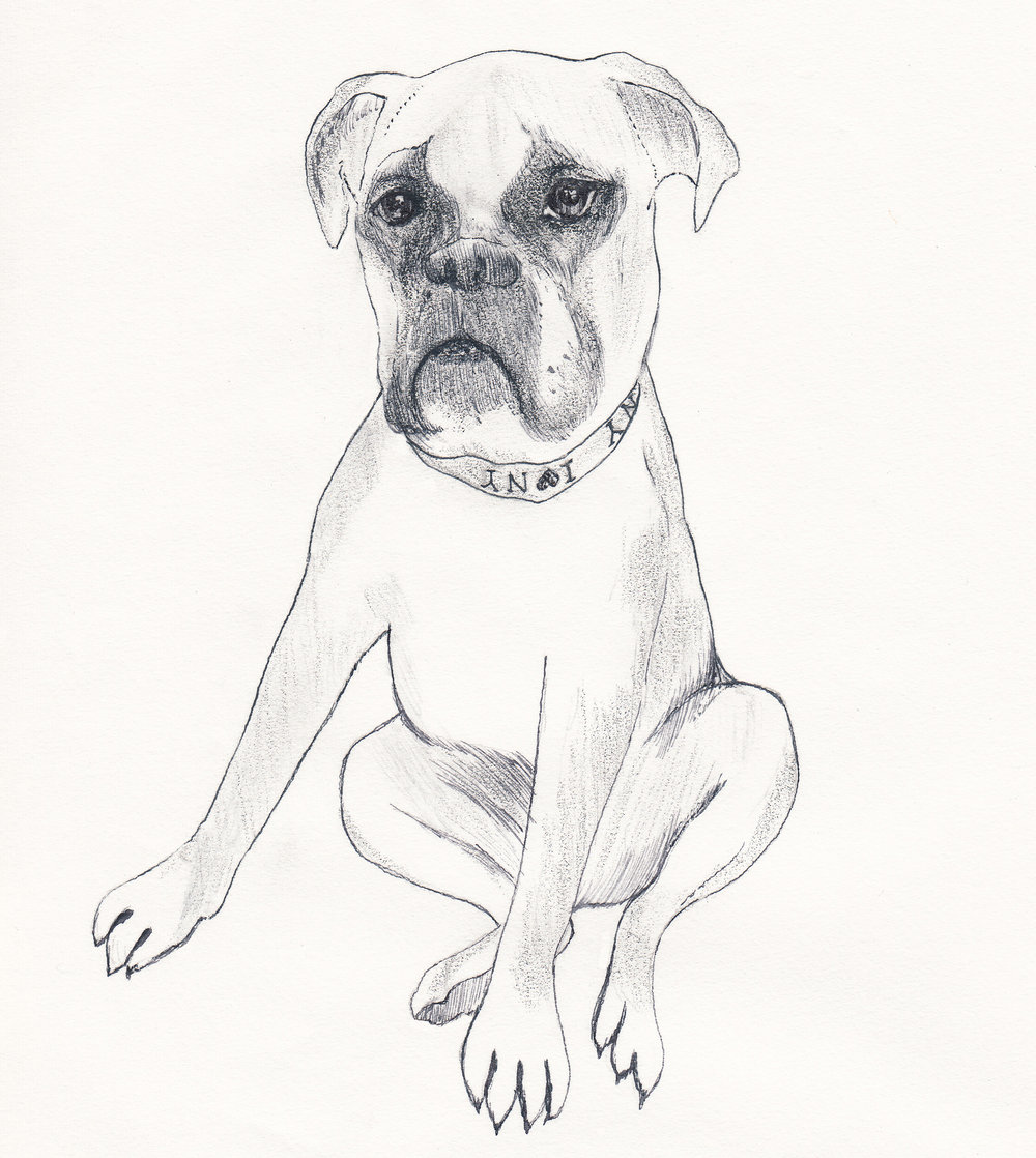 Illustration of Bodi the Dog