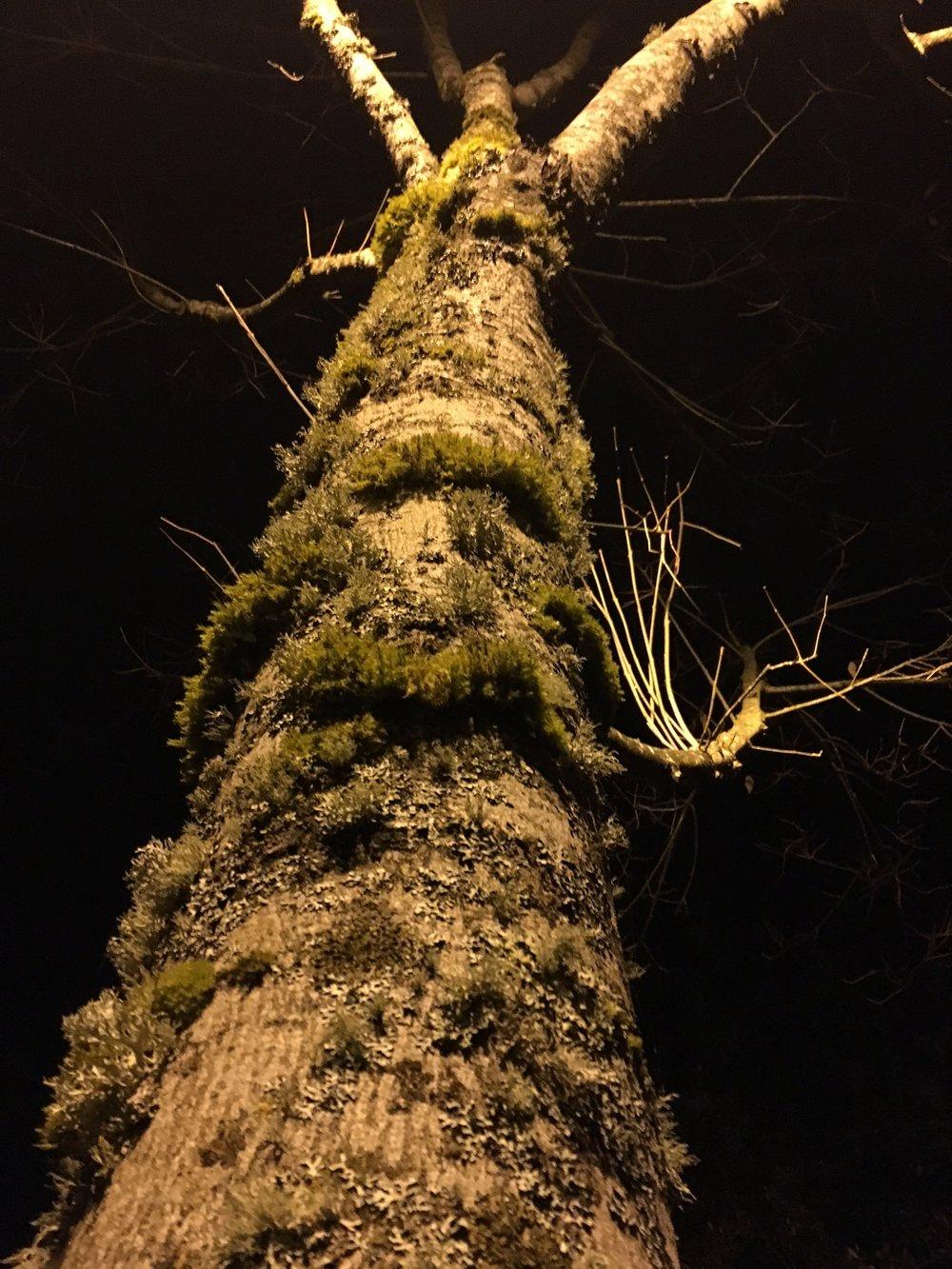 Moss/Tree