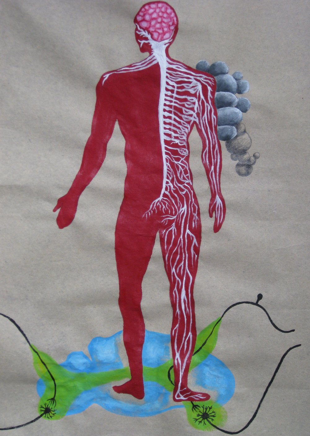 Le Systeme Nerveux De L'Homme (Coupe Transversale de la Moelle Epiniere)