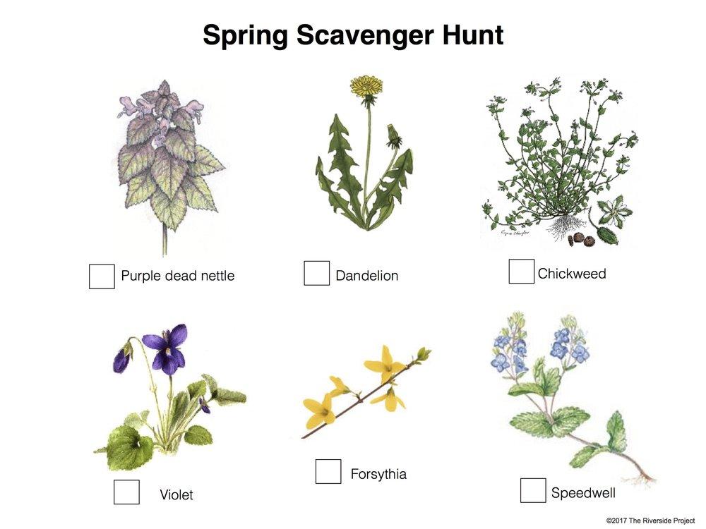 Spring Scavenger Hunt.jpg