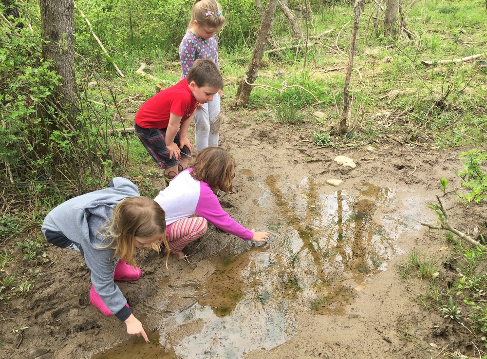 Riverside Nature School Vernal Pool.JPG