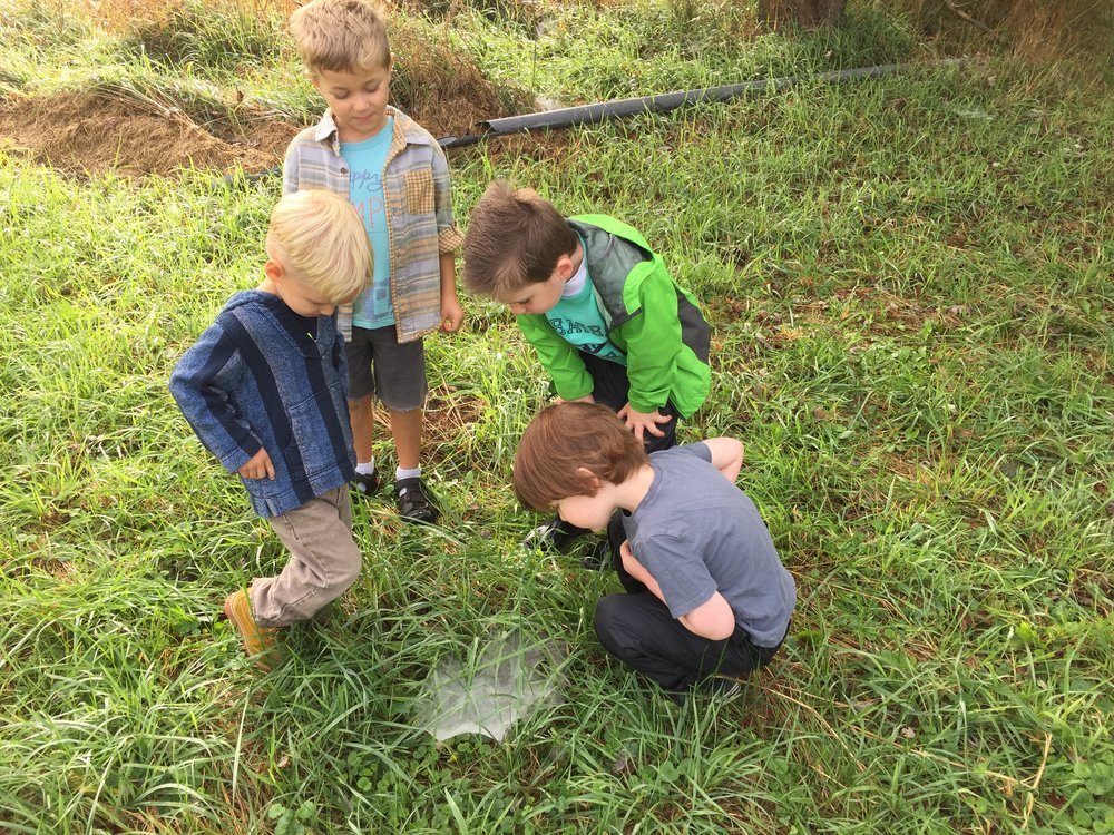 Riverside Nature School Spider Web.JPG