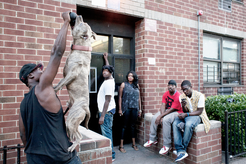 A man plays with his pit bull in front of Park Rock Houses, 2013.