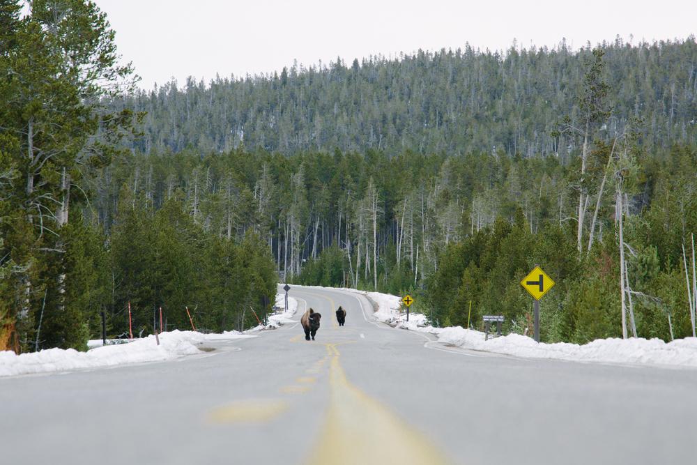 Montana-1632.jpg