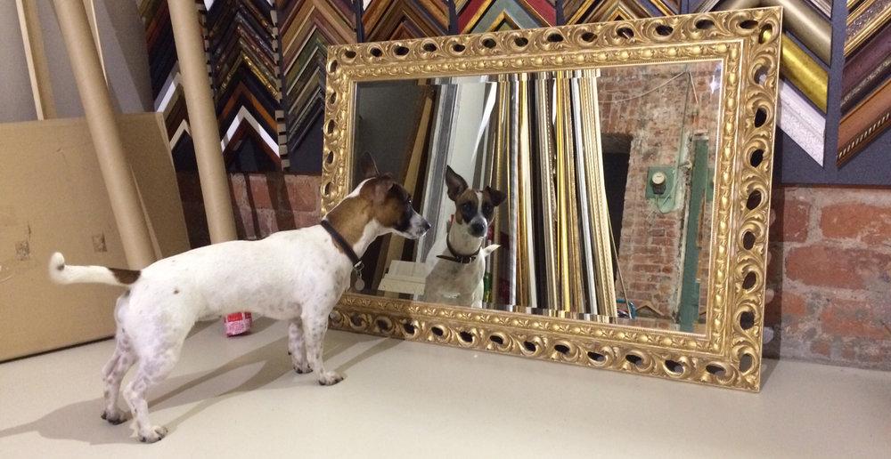 mirror-dog.jpg