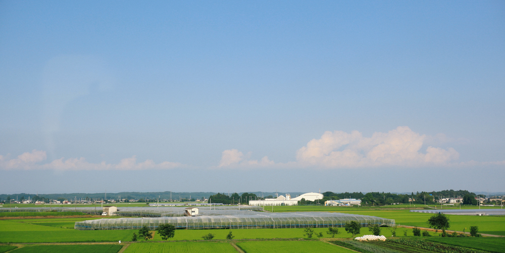 On the high speed train to Sendai. I took this photo out of the window going nearly 200 miles per hour, I think.