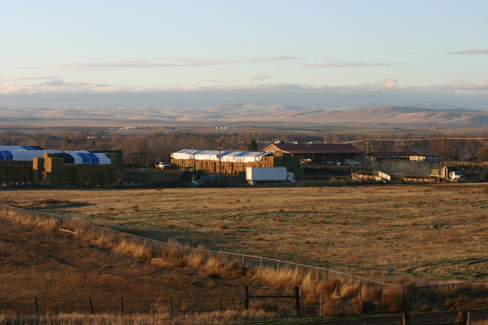 The 7UP Bull Development Center located in Stanfield, Oregon.