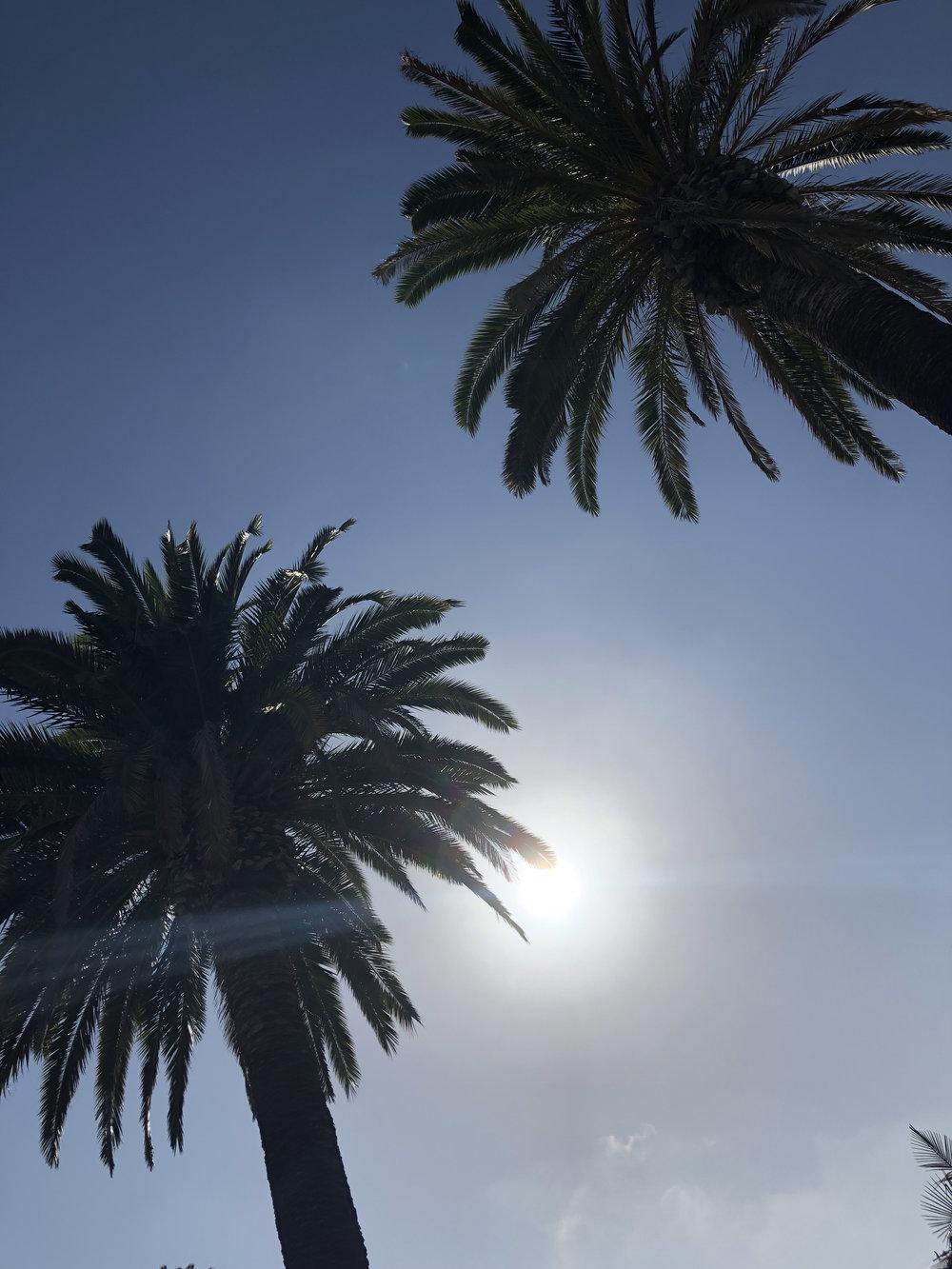 Palm Trees2.jpg