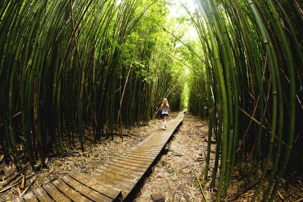 bamb.jpg