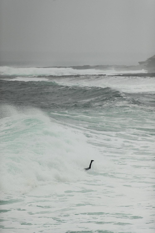SurfBru-60.jpg