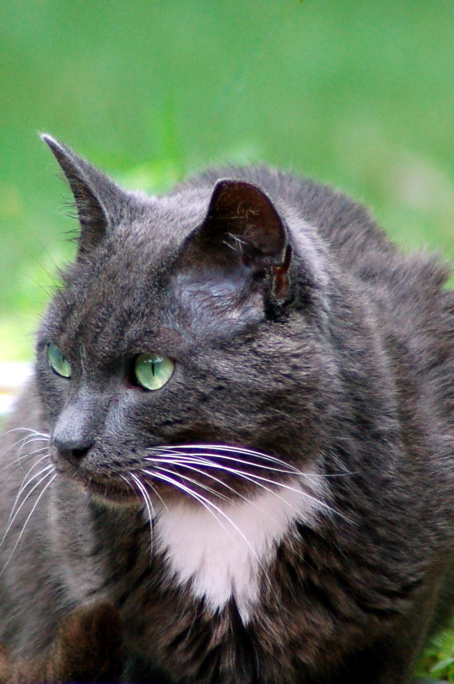 Jack the Cat 005.jpg