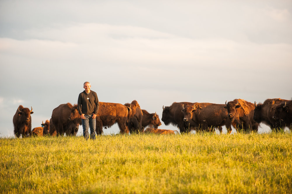 Honest Bison Sean with bison herd.jpg