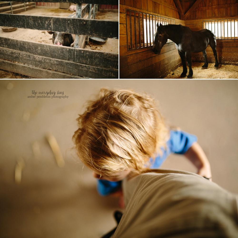 farm-photography.jpg
