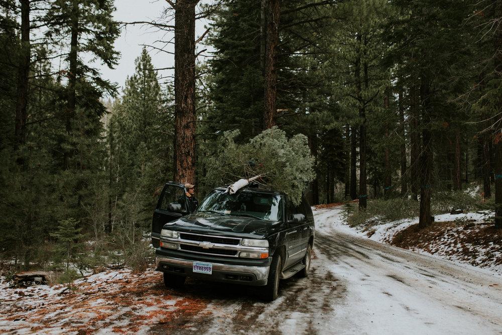 christmas-tree-cutting-reno