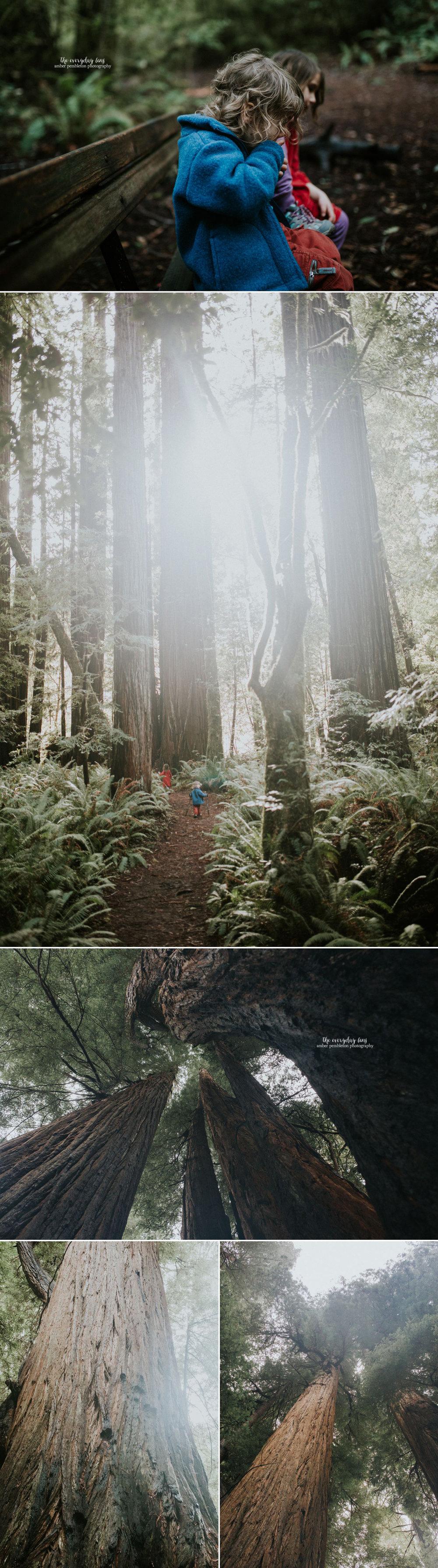 kids-who-hike-redwoods.jpg