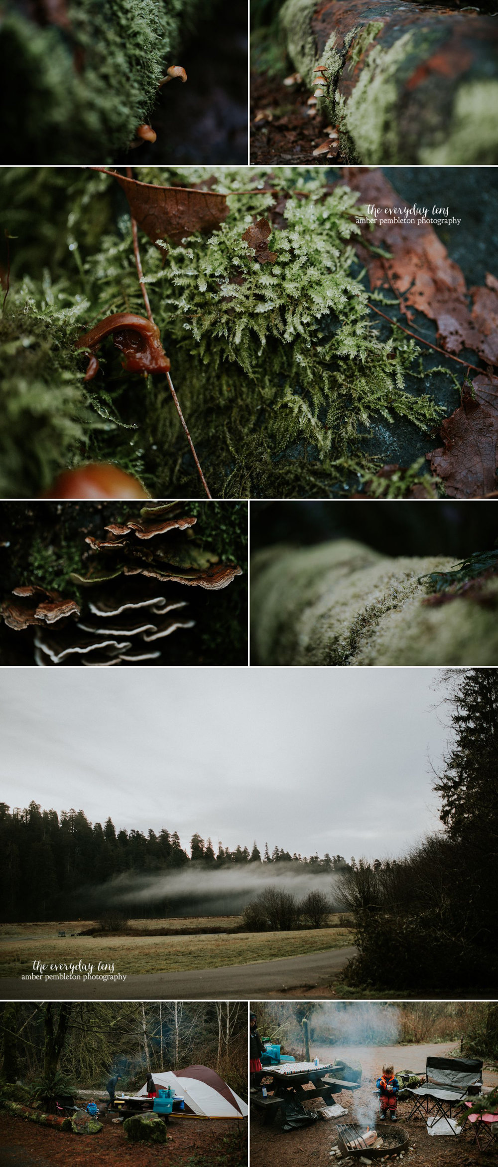 macro-fungi-praire-creek.jpg