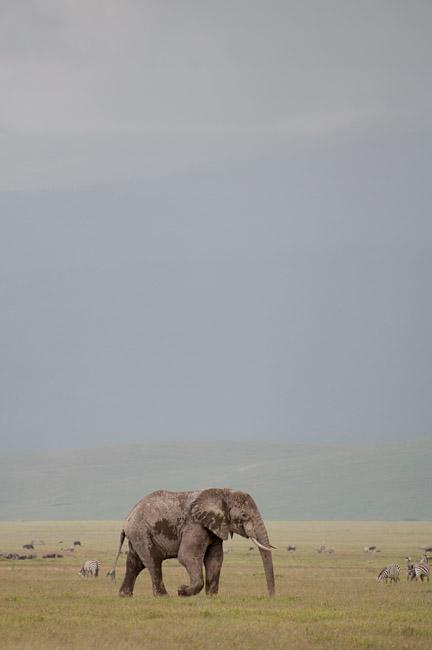 elephant_ngorongoro.jpg