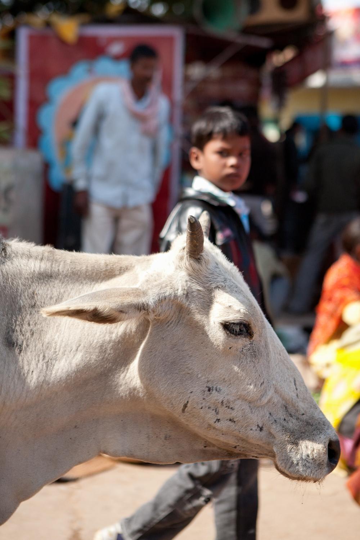 indianindia-42.jpg