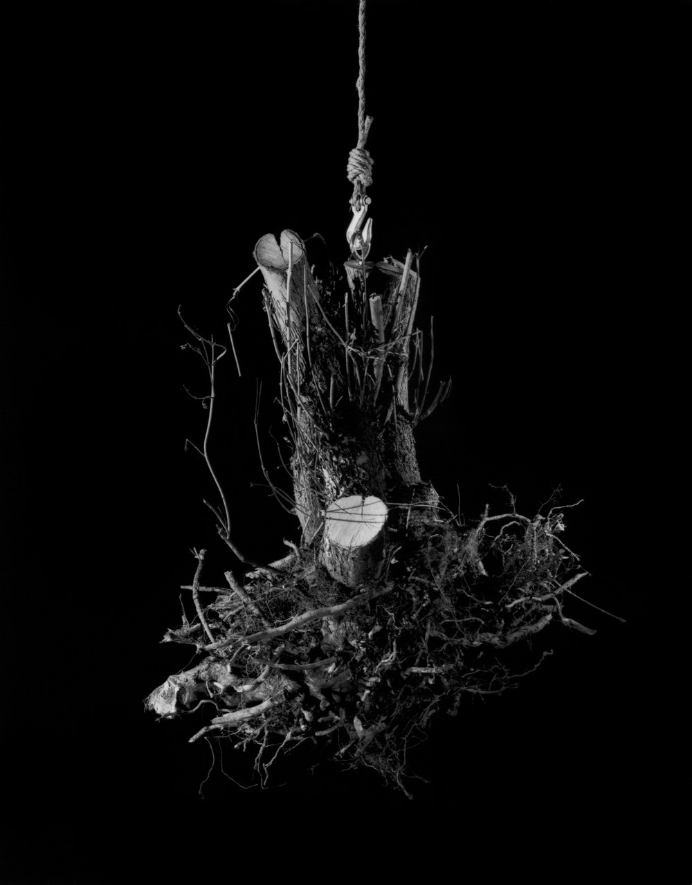 root4.jpg