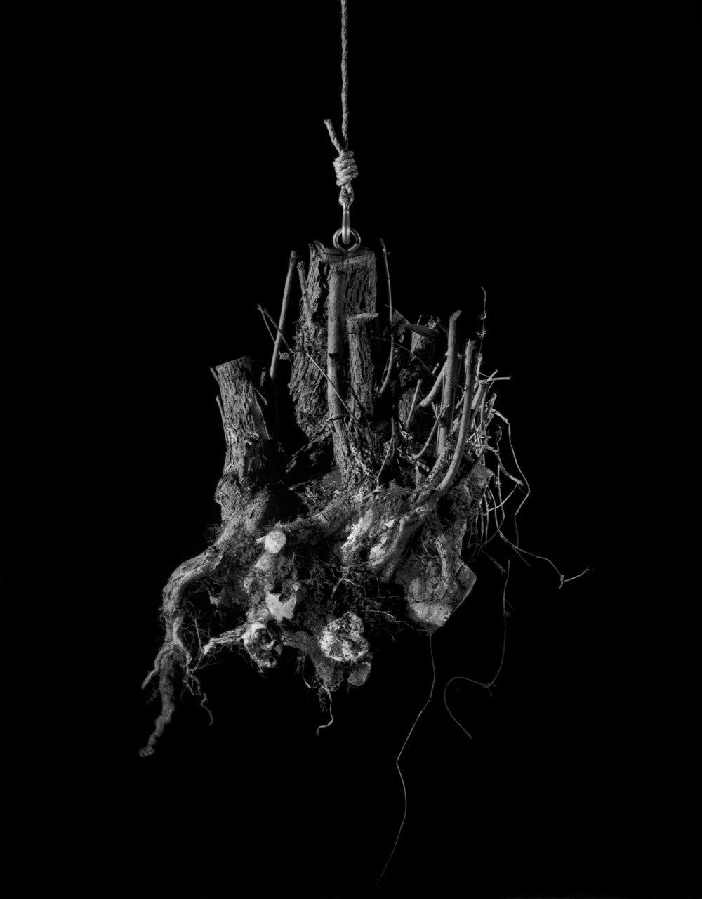 root6.jpg