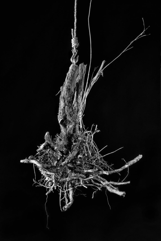 root2 11x17print.jpg