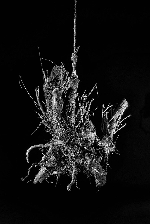 root5 8x10print.jpg