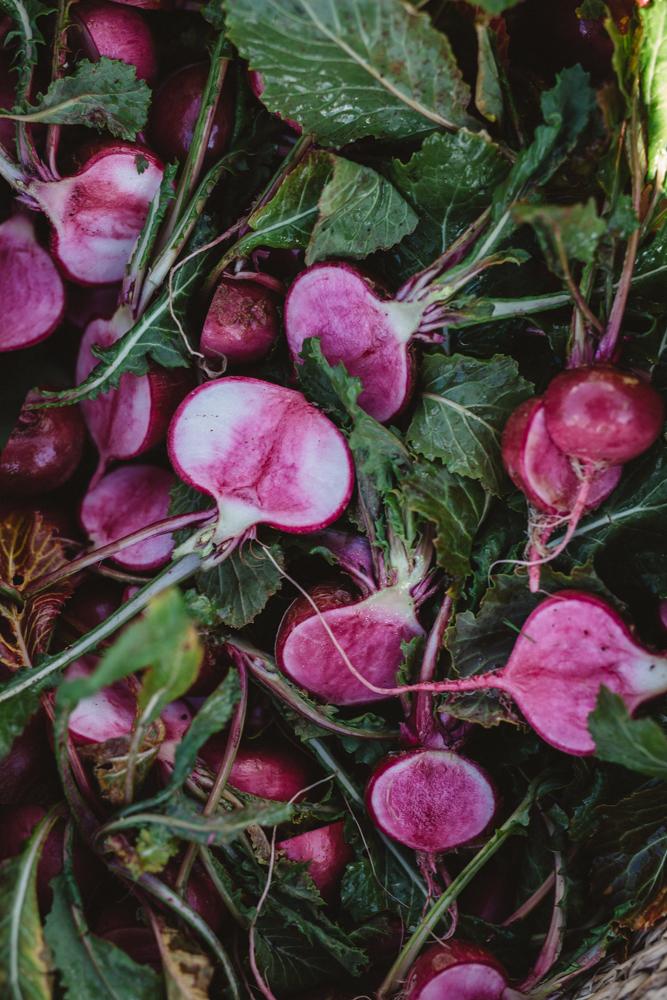 SG_Logan Brae Orchards_by_Luisa Brimble-980.jpg