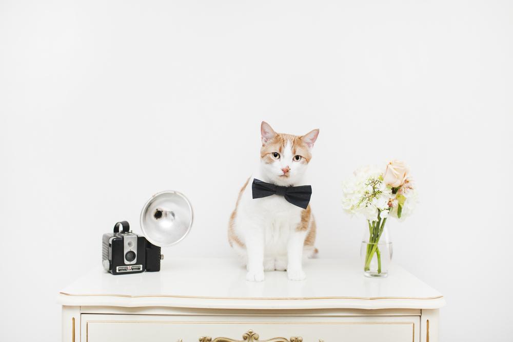 cat-bowtie