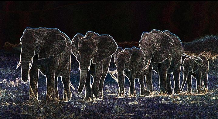 Elephant Train-s.jpg