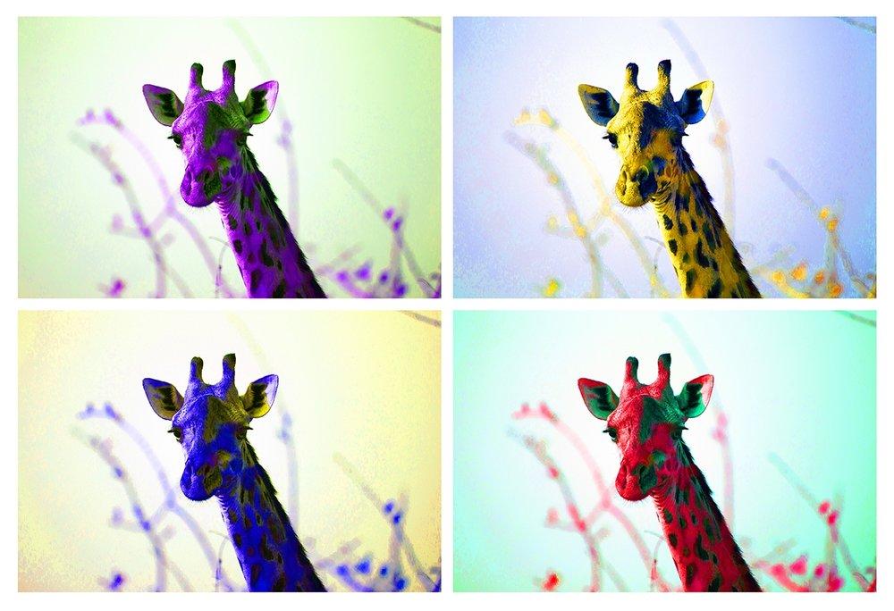 soft giraffe 13x19-s.jpg