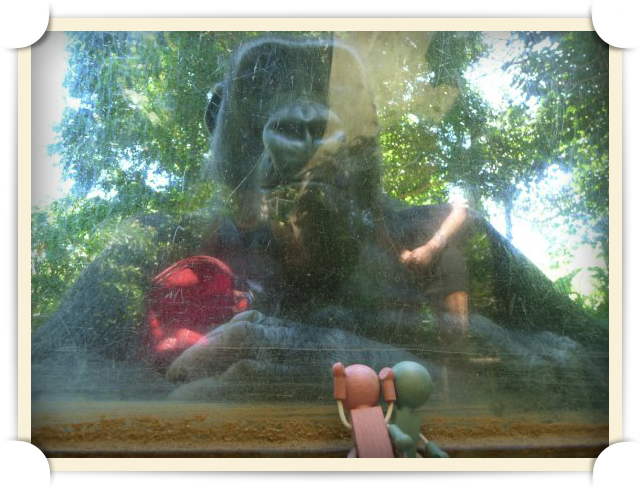 Mr. and Mrs. Lumberson are distressed by King Kong in the dense jungles of Melbourne Zoo.