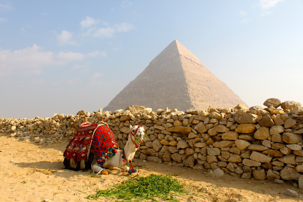 A camel takes a snack break by the shade in Cairo, Egypt.