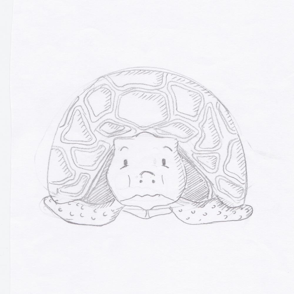 Trevor the closeted Tortoise