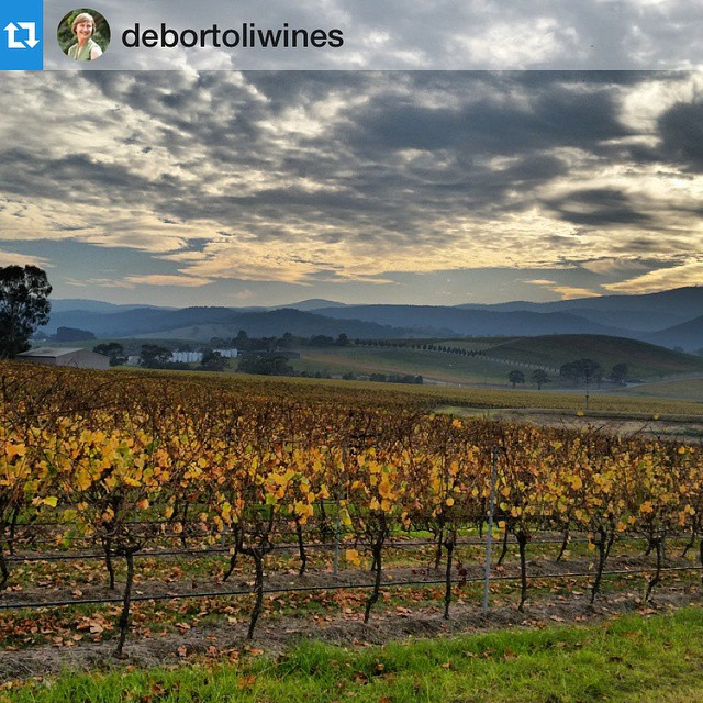 "🍇 Congratulations on another terrific harvest @debortoliwines Like all of our growers, our job is done for another year. See you all in 2016! 📷: De Bortoli Wines ""The vineyard is awfully quiet now. No longer any sounds of workers, tractors, pickers, harvesters. Its job is done -  to deliver us the best fruit possible. Now it can rest, until it is time for winter pruning"" #Vintage2015 #V15 #Australia"