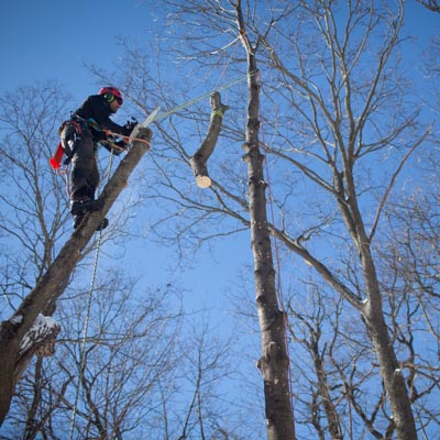 We remove large branches and lower them to the ground with ropes to minimize damage to buildings and other trees.