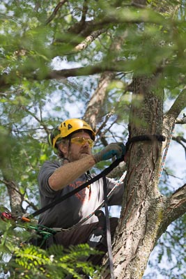 structural tree support systems madison wi