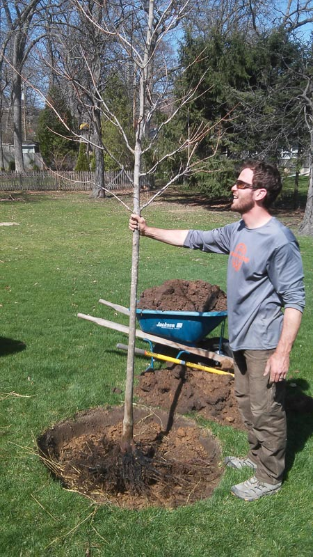 Bare root trees are generally light and easy for one person to pick up.