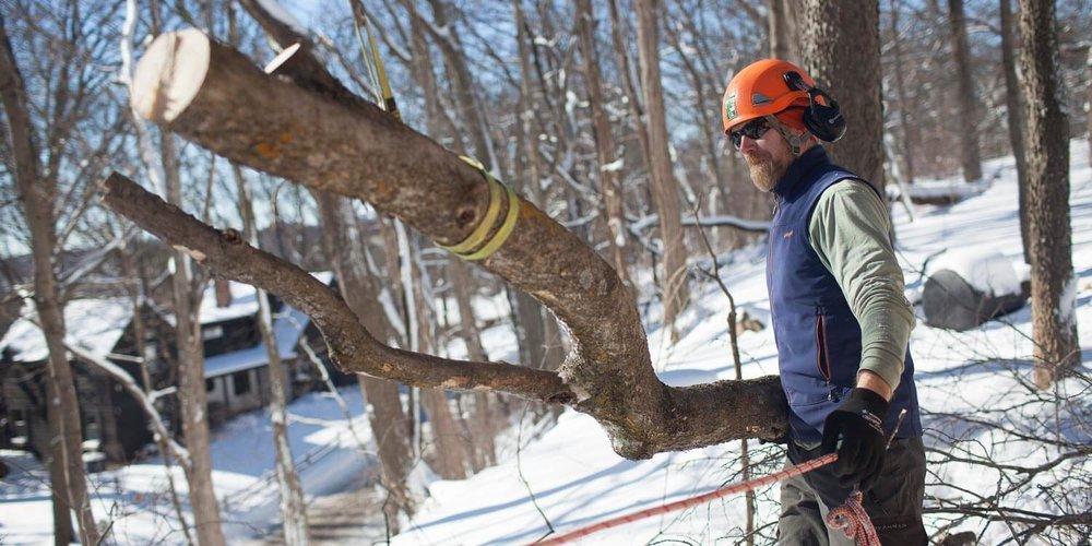 Madison-Arborist.JPG