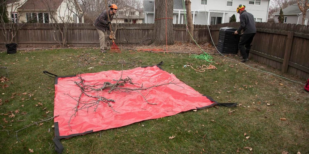 Cleaning-Up-Branches.JPG