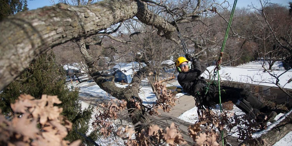 Tree Care.JPG