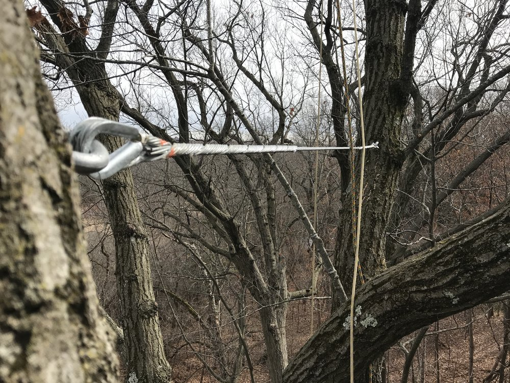 Rigid cabling supports larger branches in bigger trees.