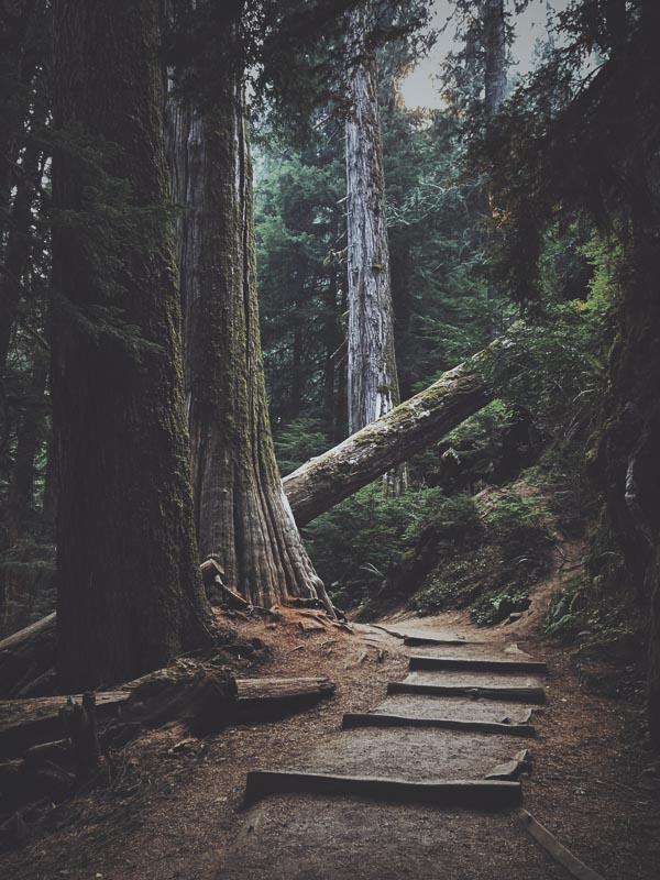RedwoodPath.jpg